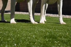 image of safe pet products by SYNLawn Tulsa artificial grass